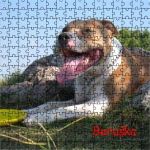 Puzzle s fotkou psa